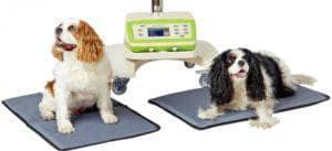 Magnetoterapia wet. 300x137 - Magnetoterapia zwierząt