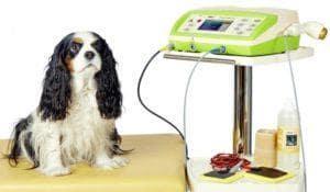 elektroterapia wet. 300x175 - Elektroterapia zwierząt